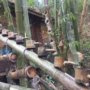 茶树王旅游景点攻略图
