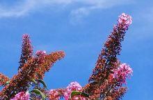 兰溪的花儿