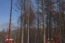 三月下旬的亚布力虎峰岭