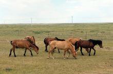 科尔沁草原牧马壮
