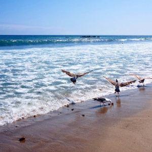 马里布海滩旅游景点攻略图
