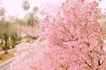 春假—奥兰多之旅