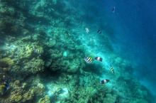 Bandos的水下世界