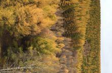秋天的美尽在塞罕坝