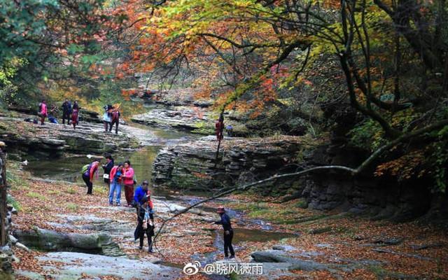 秋天那么美,去汉中黎坪看十万七彩洋伞斗艳万亩红叶!