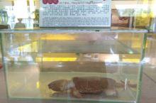 梧州双钱牌龟苓膏厂