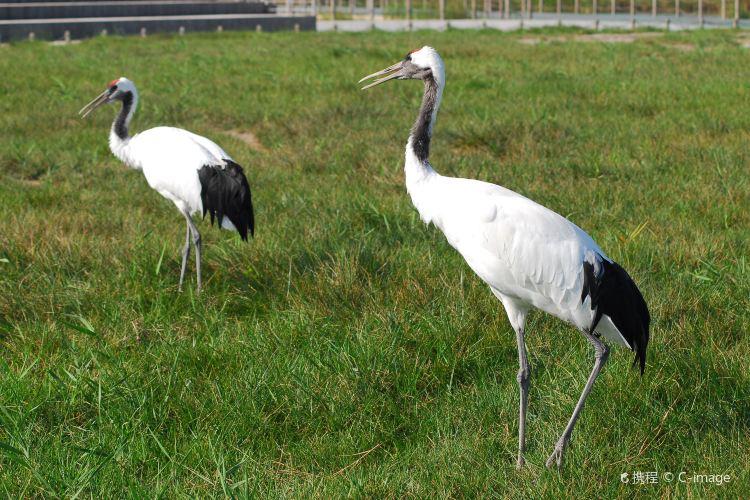 Yancheng Wetland National Nature Reserve Rare Birds1