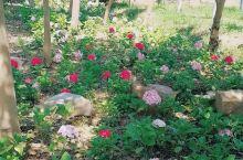 长兴岛的秘密花园