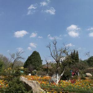 黑龙潭公园旅游景点攻略图