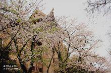 """""""三月赏樱,唯有武大"""",武汉的樱花指南了解一下~"""