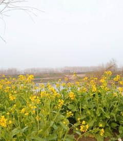 [黄河游览区游记图片] 在黄河风景区徜徉,一个人洒脱而舒畅