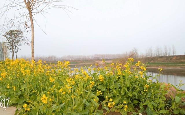 在黄河风景区徜徉,一个人洒脱而舒畅