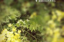不负春光不负你-樱花季游走杭州良渚文化艺术中心
