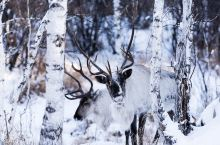 银冬内蒙古,冰雪中的童话世界