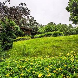 铁山坪森林公园旅游景点攻略图