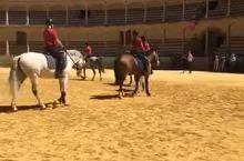 在西班牙最古老的斗牛场参观时,刚好碰到了当地的马术训练课