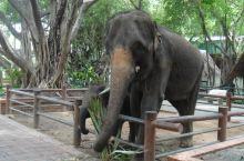 泰国三攀大象鳄鱼表演园