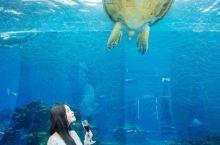 打卡✔️三亚超美网红海底餐厅,浪漫求婚地