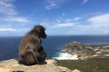 與人和平共處的南非野生動物