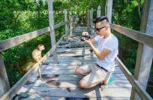 """#向往的生活 某非典型文艺青年在亚马逊热带雨林被动物""""包围"""""""