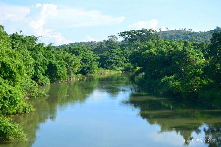 Kawa紅樹林1