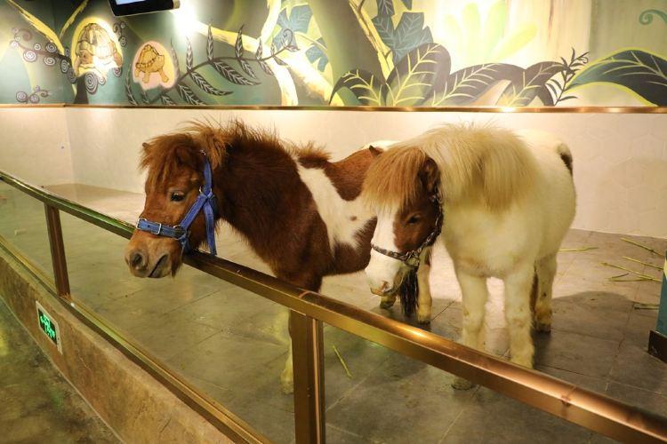 Myzoo Maizu Shinei Dongwu Guanshang Amusement Park3