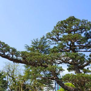 骏府城公园旅游景点攻略图