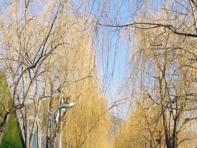 江心島公園