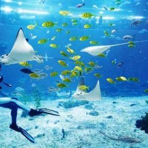 两大洋水族馆旅游景点攻略图