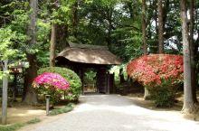 NO.5偕乐园  作为日本三大名园之一,是1842年由水户藩第九代藩主德川齐昭营造的回廊式庭园。园内