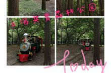 上海也有一个大森林