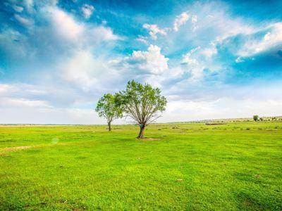 Subohan Grasslands