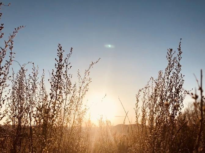 呼伦贝尔大草原 一万个人眼中有一万种呼伦贝尔大草原的秋 – 呼伦贝尔游记攻略插图47