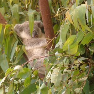 龙柏考拉保护区旅游景点攻略图