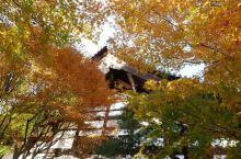 京都の龙安寺#金秋红叶#