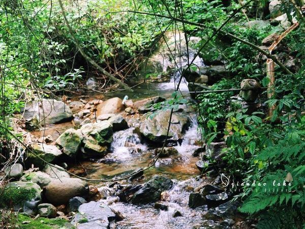 첸다오후 삼림산소방(천도호 삼림양파)4