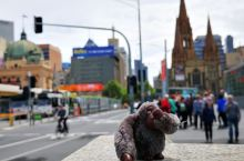 再别猫本,重回悉尼
