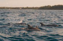 和少年派一起,出海追海豚