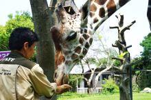 大阪动物园童趣半日游