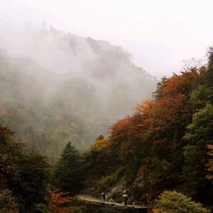 青川游记图文-行摄川北の 唐家河自然保护区 雨中秋色(2)