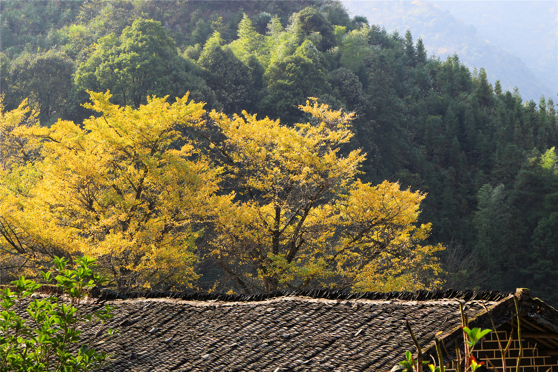 桐子坳旅游景点图片
