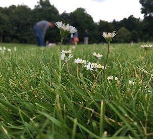 草坪旅游景点攻略图