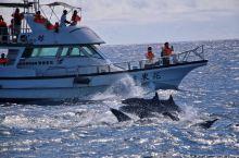 花莲东海岸『赏可爱小鲸豚』