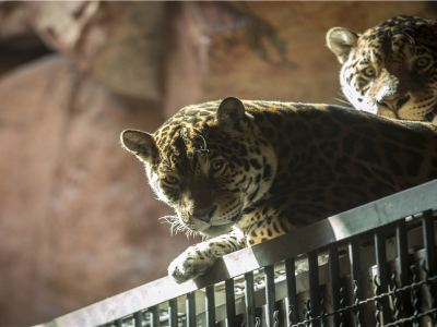 鄂爾多斯野生動物園