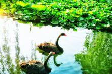 八月三日游颐和园
