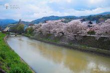 在樱花盛开的时节去见你