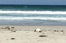 「私奔袋鼠島」探尋海之精靈 Seal Bay
