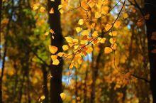 贝加尔湖利斯特维扬卡的秋天