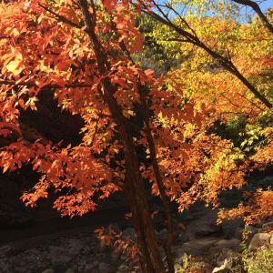 玉龙溪原始森林公园旅游景点攻略图
