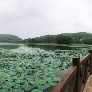 桃子湖旅游景点攻略图